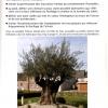 un-olivier-dans-son-jardin-vise