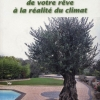 un-olivier-dans-son-jardin