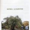 un-olivier-dans-son-jardin-2