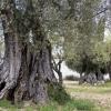 26-oliviers-buera-2